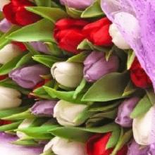 Какие цветы лучше дарить женщинам на 8 марта?