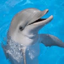 Сонник Дельфин, к чему снятся дельфины во сне?