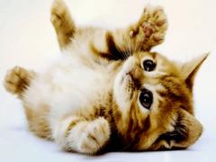 Что обозначают котята во сне?