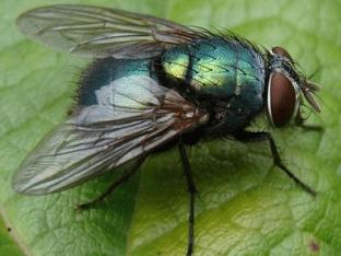Что означает когда снится мухи?