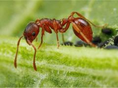 Что означает когда снится муравьи?