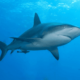 Сонник: акула – что означает видеть во сне акулу?