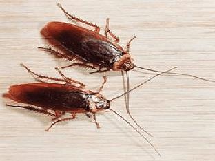 Видеть во сне таракана - к чему это?