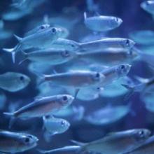 Видеть во сне живую рыбу, что означает?