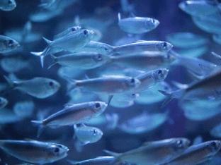 Видеть во сне живую рыбу, что означает