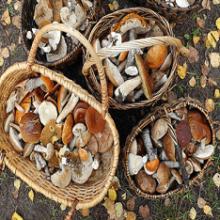 Что означает сон, когда снятся грибы?