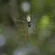 Что означает сон, когда снятся пауки?