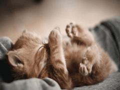 Если приснился котенок, узнать значение сна