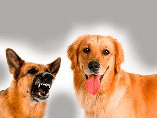 О чем может предвещать увиденная во сне собака
