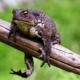О чем может предвещать увиденная во сне жаба или лягушка
