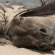 Приснилася лошадь: что это значит по сонникам?