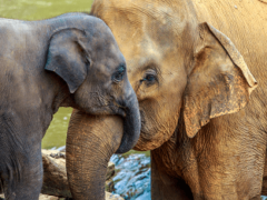 Видеть во слона — что означает слон?