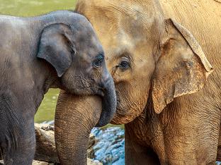 Видеть во слона - что означает слон?