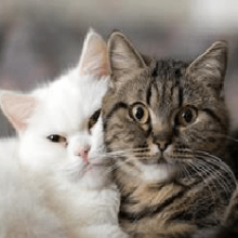 К чему снится кот — значение сна кот по соннику