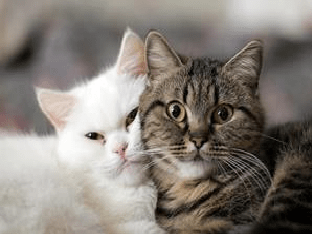К чему снится кот - значение сна кот по соннику