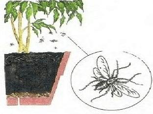 Как бороться с мошками в цветах