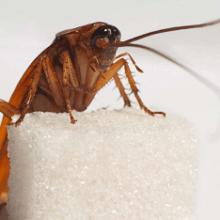 Как и чем травить тараканов, чтобы избавиться от них навсегда?
