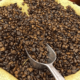 Как обрабатывают самый дорогой кофе в мире?