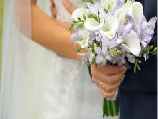 Каллы в доме и другие приметы и суеверия про цветок