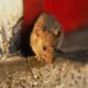 Мыши в доме: как избавиться и чего они боятся?