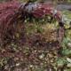 Нужно ли укрывать плетистую розу на зиму?