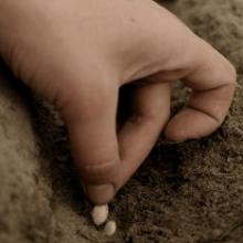 Проращивание, посадка семян тыквы и уход за рассадой