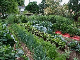 Севооборот, или Что после чего сажать в огороде