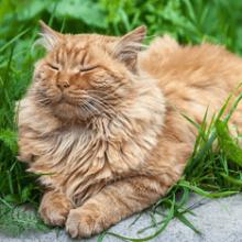 Сонник кот к чему снится кот во сне