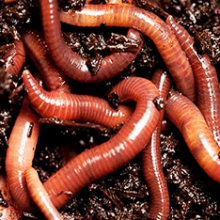 Видеть во сне червей — что означают черви?