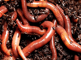Видеть во сне червей - что означают черви?