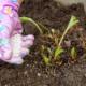Чем удобрять клубнику весной, летом и осенью?