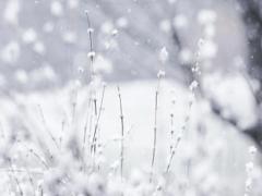 Приснился белый снег — толкование сна по сонникам