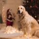 Год собаки 2018: как встречать?