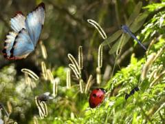 Приснились насекомые, к чему снятся насекомые, узнать значение сна