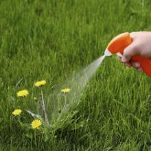 Обзор популярных гербицидов для газона от сорняков