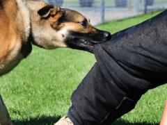 Собака нападает: сонник. К чему снится, что нападают собаки