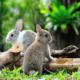 Сонник Кролик, к чему снится Кролик во сне видеть