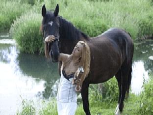 Где купить шампунь «Лошадиная сила»