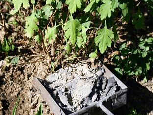 Зола как удобрение — как применять древесную золу