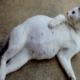 Приснилась беременная кошка: что это значит?
