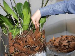 Учимся делать грунт для орхидеи своими руками в домашних условиях — что и как сделать?