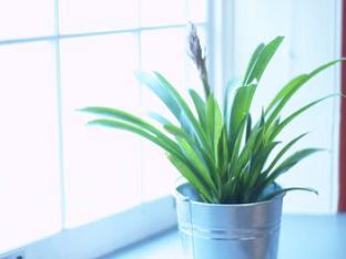 Как выбрать лампу для растений?