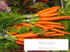 В чем польза моркови?