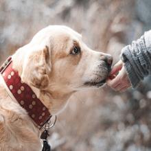 К чему снится собака — толкование сна