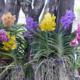 Как ухаживать за орхидеей ванда?