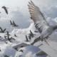 Сонник Птицы, к чему снится Птицы