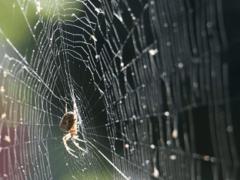 Сонник паутина к чему снится паутина во сне