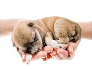 Сонник щенок к чему снится щенок во сне