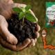Что такое биогумус и как правильно его применять?