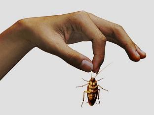 Как бороться с тараканами в квартире?